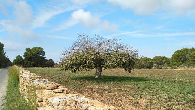 fig-tree-blog-post