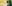 POTM-Organ-Chorales-of-Samuel-Scheidt